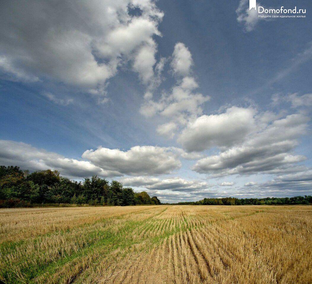 честь земля с фото барнаул сельхозназначения словам